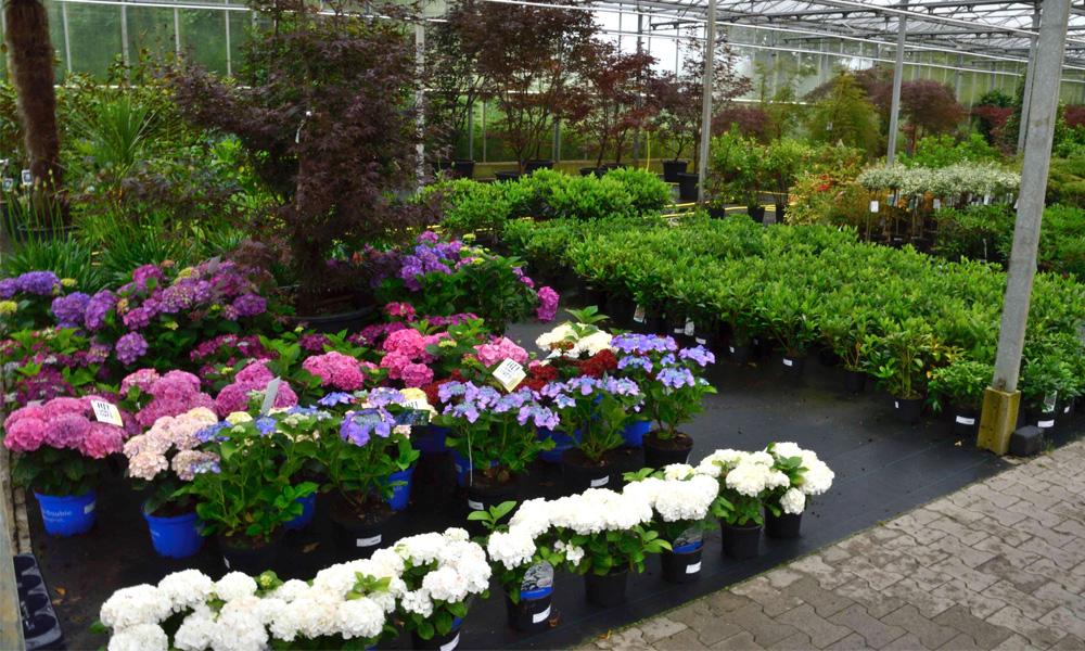 Tuinplanten kopen beplanting voor in de tuin friesland